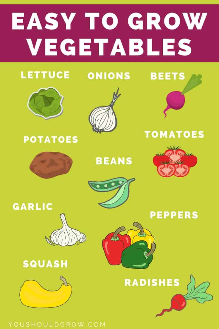 Infographic showing easy to grow vegetables: lettuce, onions, beets, potatoes, beans, tomaotes, garlic, peppers, squash, radishes