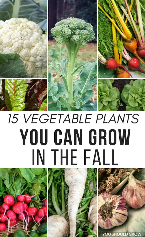 15 vegetable plants you can grow in the fall