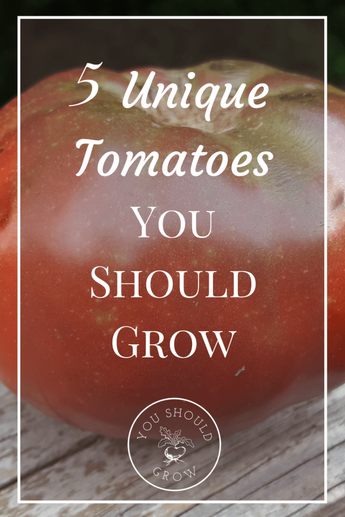 Five Tomatoes You Should Grow
