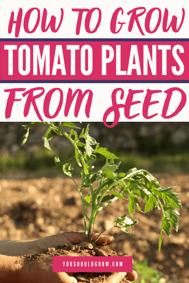 Growing Tomatoes From Seed, you can do it! Step by step instructions plus follow up posts for transplanting, hardening off, and planting in the garden. Ready to grow tomatoes? Let's go!