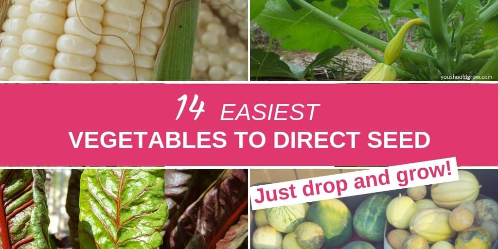 14 easiest vegetables to direct seed in your garden text overlay images of vegetables