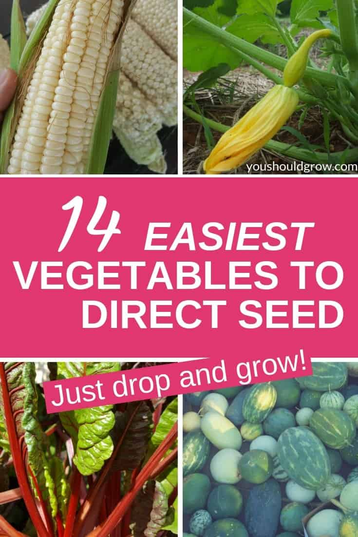 14 easiest vegetables to direct seed. Just drop and grow. Text overlay on collage of images of vegetables