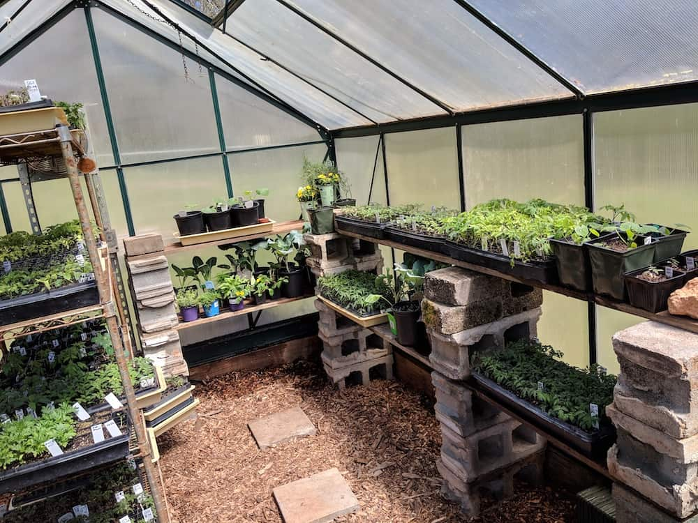 greenhouse with vegetable plant starts sunning