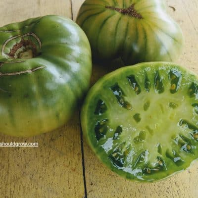 How Long Do Tomato Seeds Last?