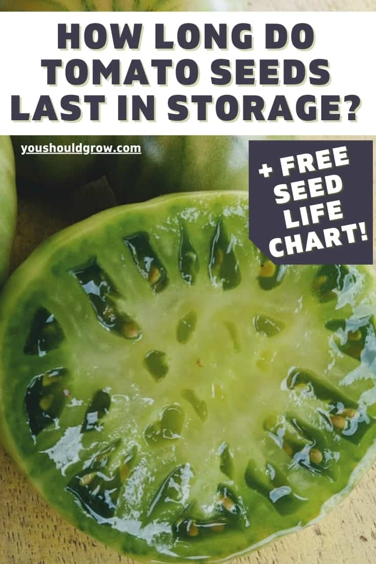 Wondering if you can plant those old tomato seeds? Here's what you need to know about how long tomato seeds last and how to store them properly. Plus a free seed life cheat sheet!