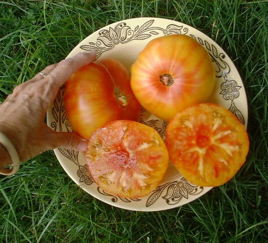Sliced pineapple tomato on a plate in the grass