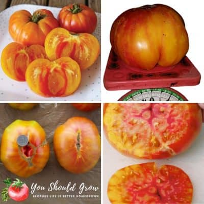 Growing The Bold & Beautiful Pineapple Tomato
