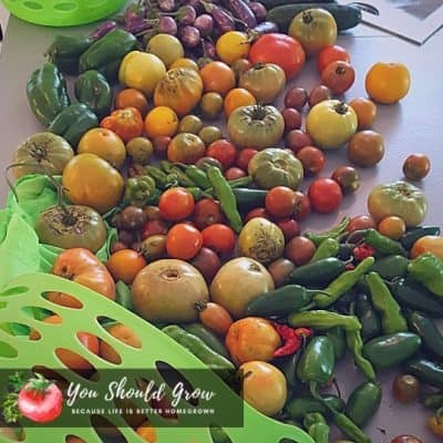 5 Tips For Prepping And Cooking Homegrown Veggies