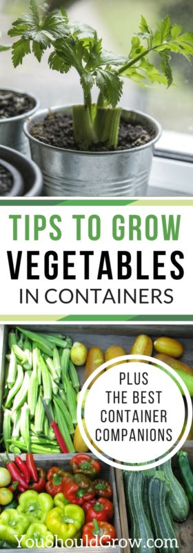 Tips to grow vegetables in containers plus the best container companions