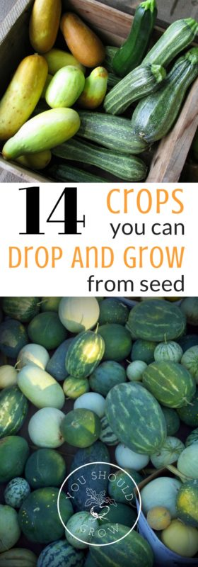 Many plants for your home garden can be seeded directly into your garden beds.