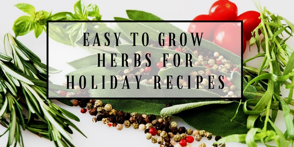 10 easy to grow herbs for holiday recipes you should grow. Black Bedroom Furniture Sets. Home Design Ideas