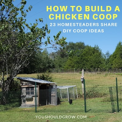How To Build A Chicken Coop: 23 Pictures Of DIY Coops