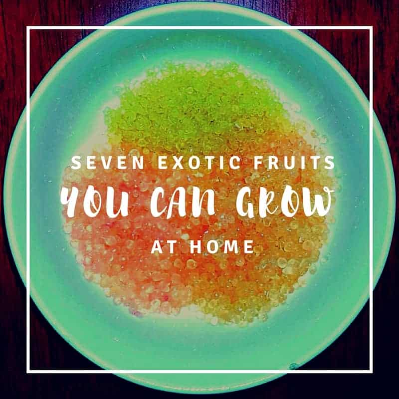 7 Exotic Fruits Grown in the USA