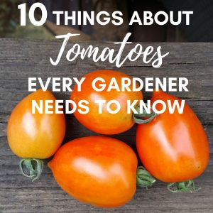 10 things about tomatoes that every gardener needs to know.