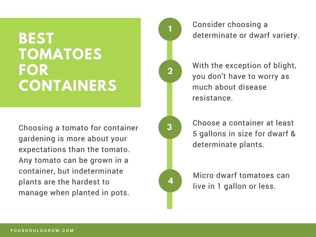 Presentation slide: best tomato varieties for containers