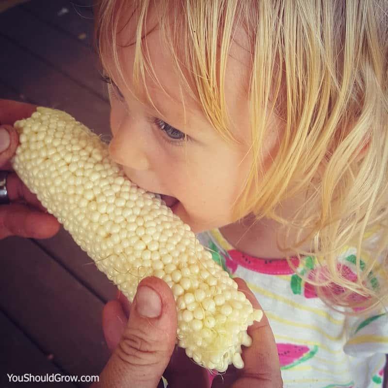 young girl eating fresh homegrown corn