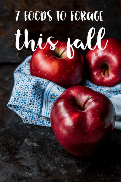 foraging for food in the fall