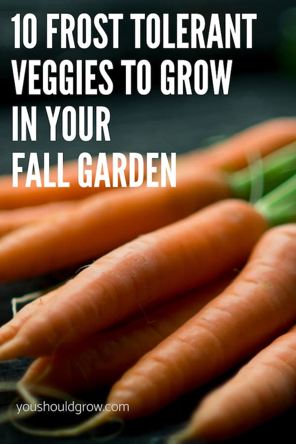 carrots are a frost tolerant vegetable perfect for fall gardens