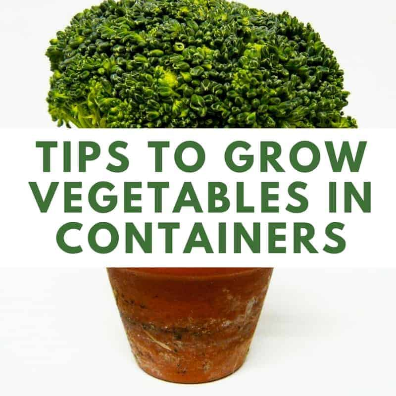 Tips To Grow Vegetables In Containers