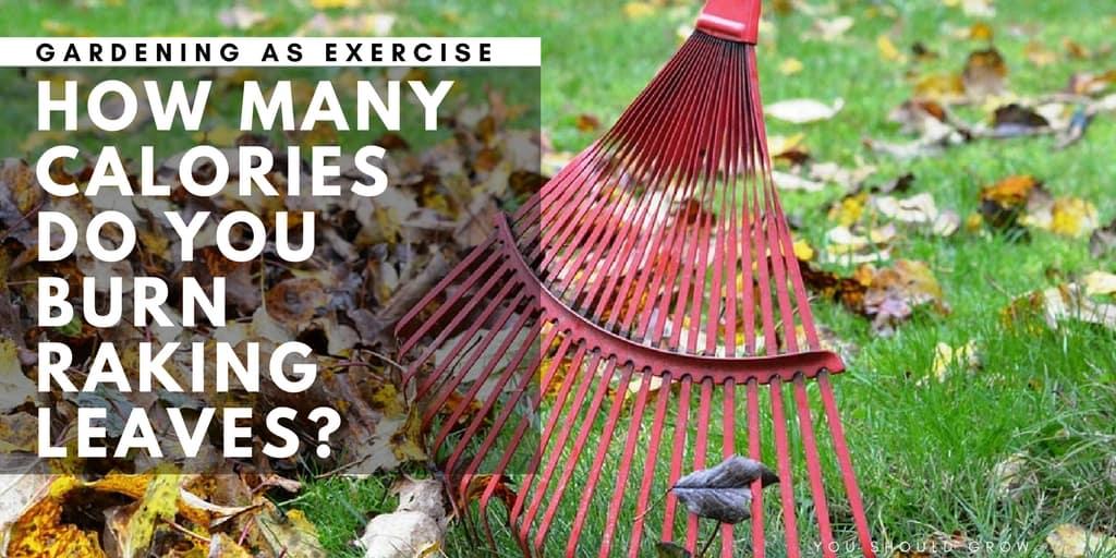 How Many Calories Do You Burn Raking Leaves You Should Grow
