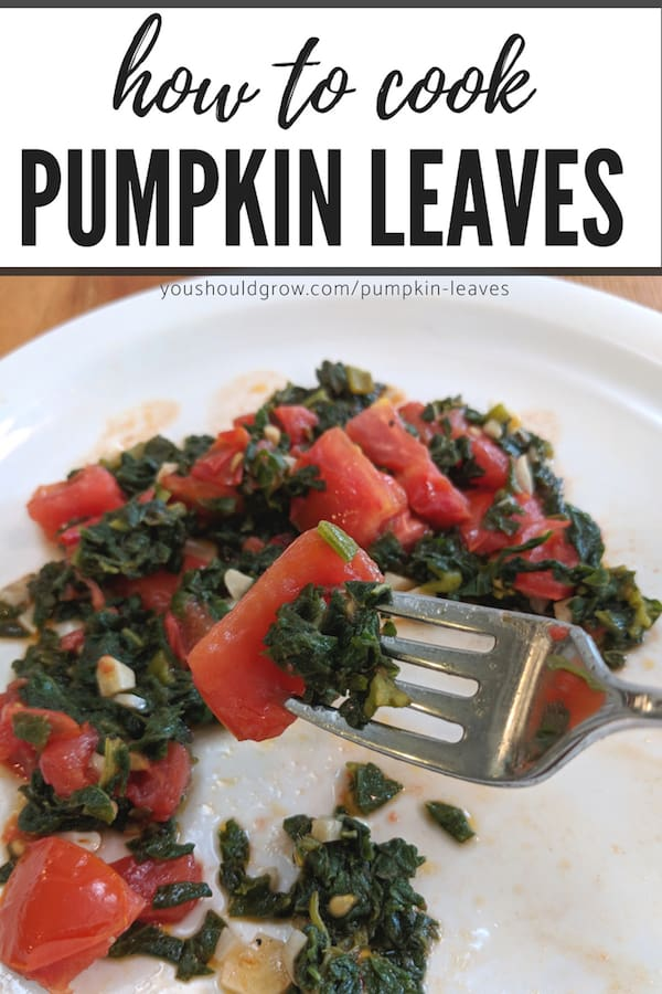 how to cook pumpkin leaves