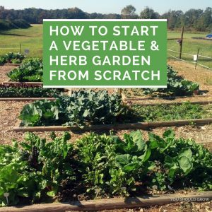how to start a vegetable and herb garden from scratch featured image