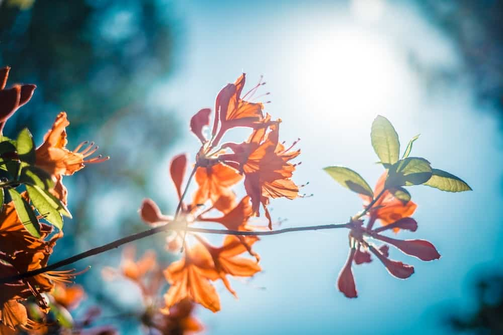 Bright colors and warm sun on your skin will elevate your mood. Image of orange flowers agains the blue sky