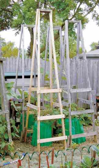 Tomato cage folding ladder