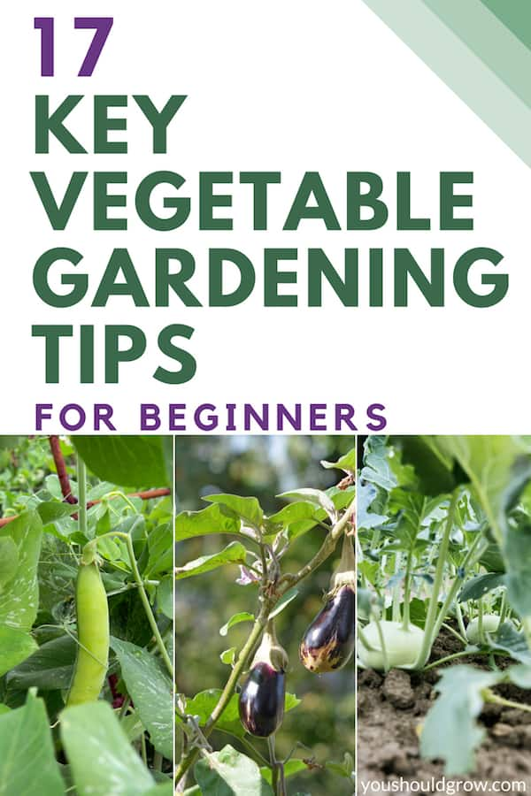 17 key vegetable gardening tips for beginners with images of vegetables growing in garden