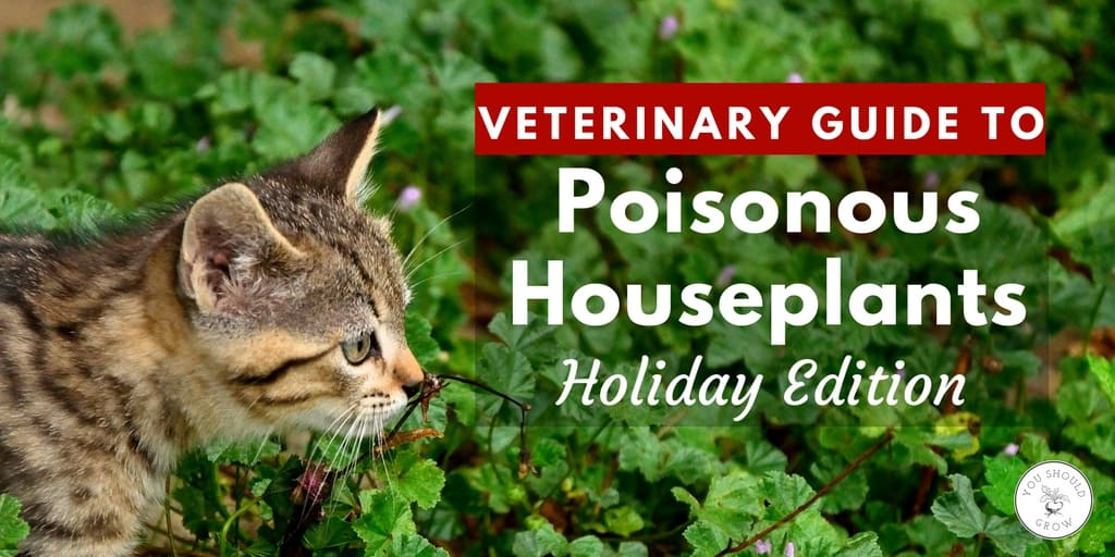 Are poinsettias poisonous to cats complete veterinary Houseplants not toxic to cats